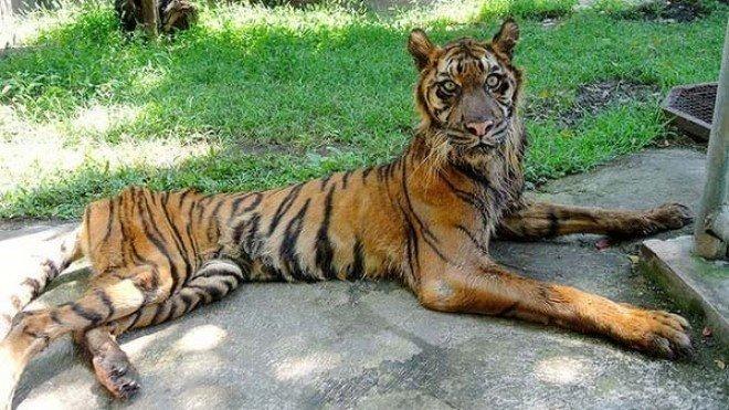 """lifebuzz 791364e721d2d59aee38aacd5b3ddef8 limit 2000.jpg?resize=1200,630 - Honte : le """"zoo de l'horreur"""" laisse mourir ses animaux"""