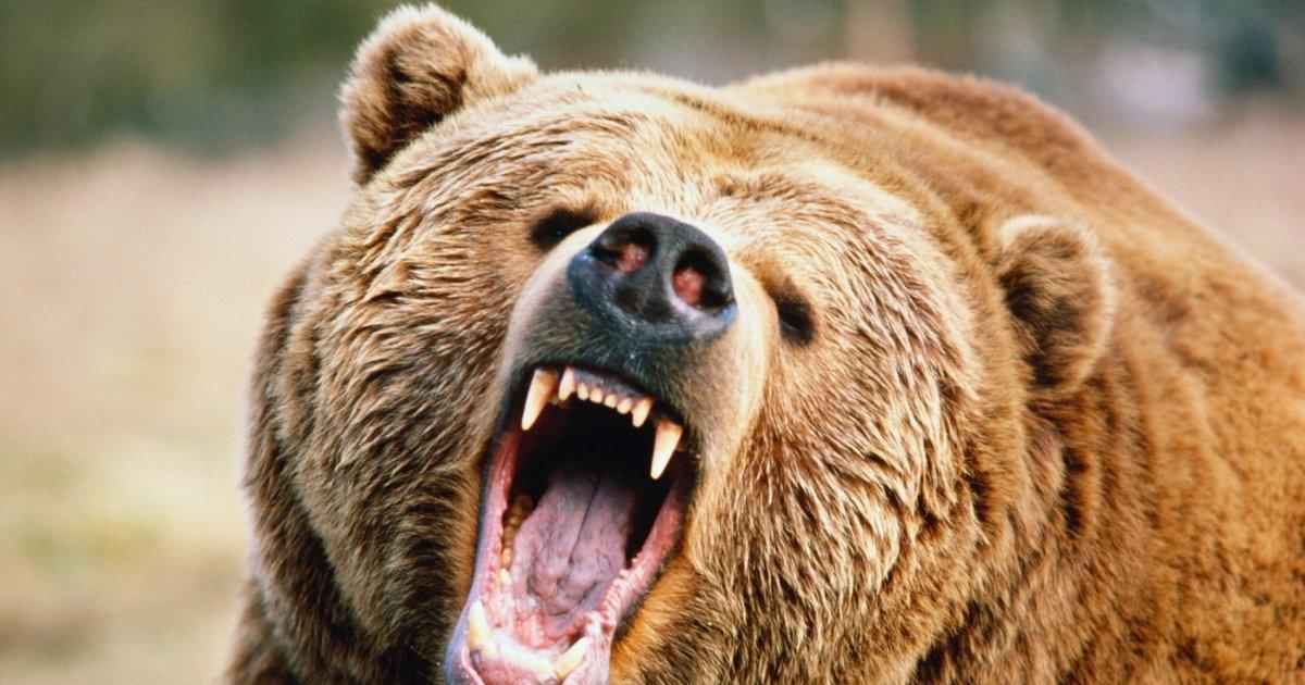 o grizzly facebook.jpg?resize=1200,630 - Canada : des hôtels offrent des séjours luxueux aux chasseurs qui renoncent à leur permis de chasse !