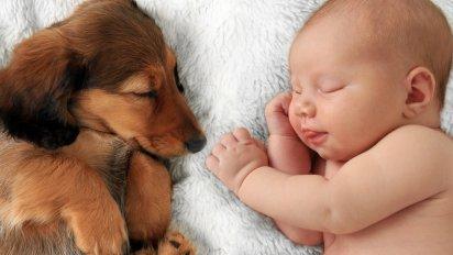 on oublieque les hommespeuvent ecc82trevictimes 6 412x232.png?resize=412,232 - Dormir avec son animal de compagnie : bonne ou mauvaise idée ?