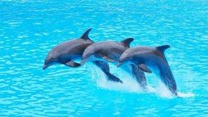 paa3 300x169 - France : la fin des dauphins en captivité, une loi qui fait débat