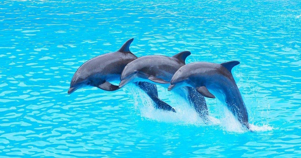 paa3.jpeg?resize=1200,630 - France : la fin des dauphins en captivité, une loi qui fait débat