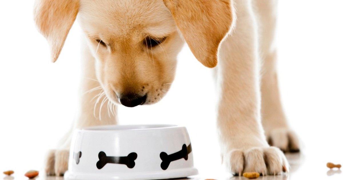 pienso perros.jpg?resize=1200,630 - Des animaux morts recyclés retrouvés dans de la nourriture pour animaux