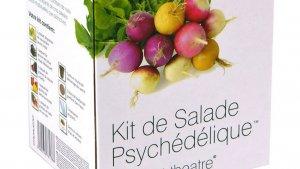 sans titre 11 1 300x169 - Le kit de Salade Psychédélique à cultiver soi-même !