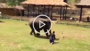 sans titre 4 2 300x169 - Un homme attaque un soigneur, son éléphant accourt pour le sauver