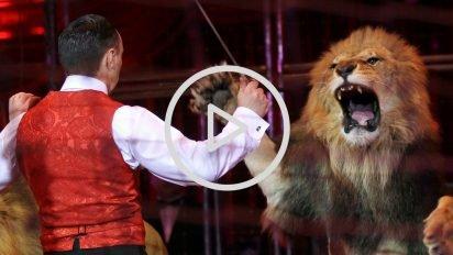 sans titre 5 412x232.jpg?resize=412,232 - Choc : Un lion filmé en train d'attaquer le dompteur d'un cirque
