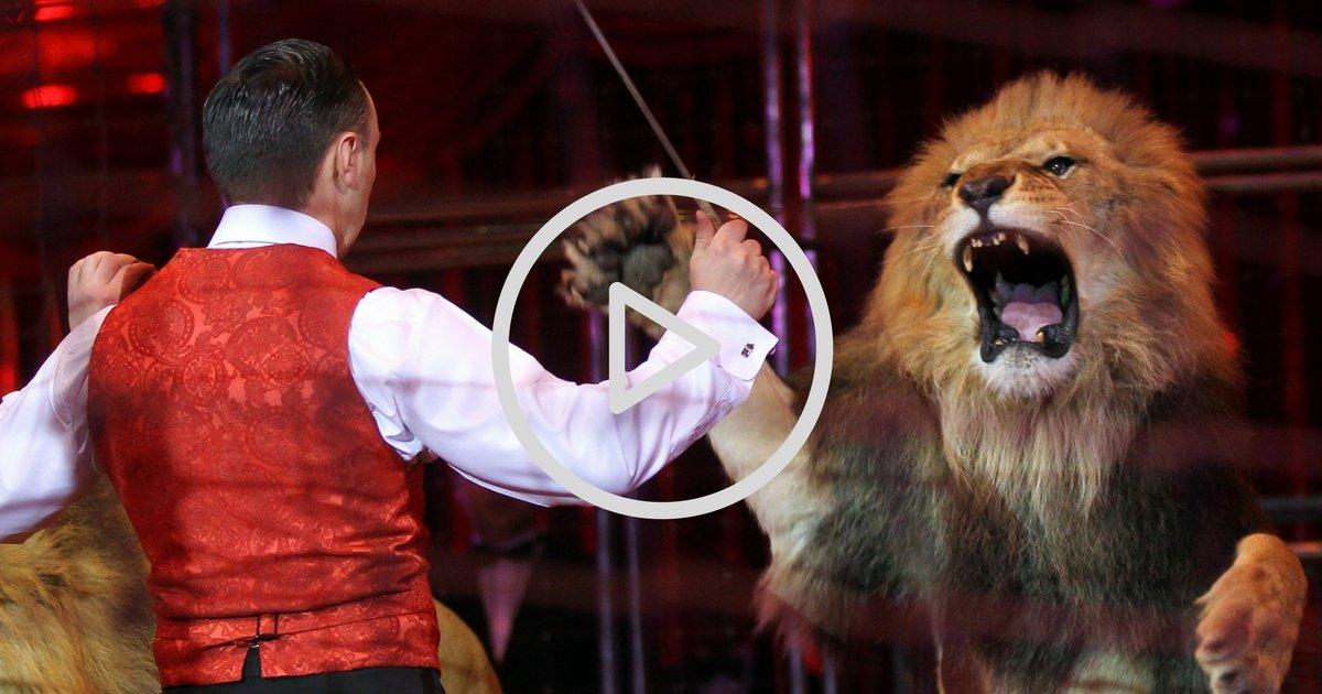 sans titre 5.jpg?resize=1200,630 - Choc : Un lion filmé en train d'attaquer le dompteur d'un cirque