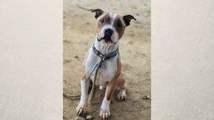 sans titre 8 3 300x169 - Cette photo d'un chien tout juste adopté affole la toile !