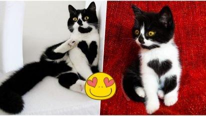 zoefacebook 412x232.jpg?resize=412,232 - Découvrez les photos de Zoë, le chat qui affiche fièrement son coeur