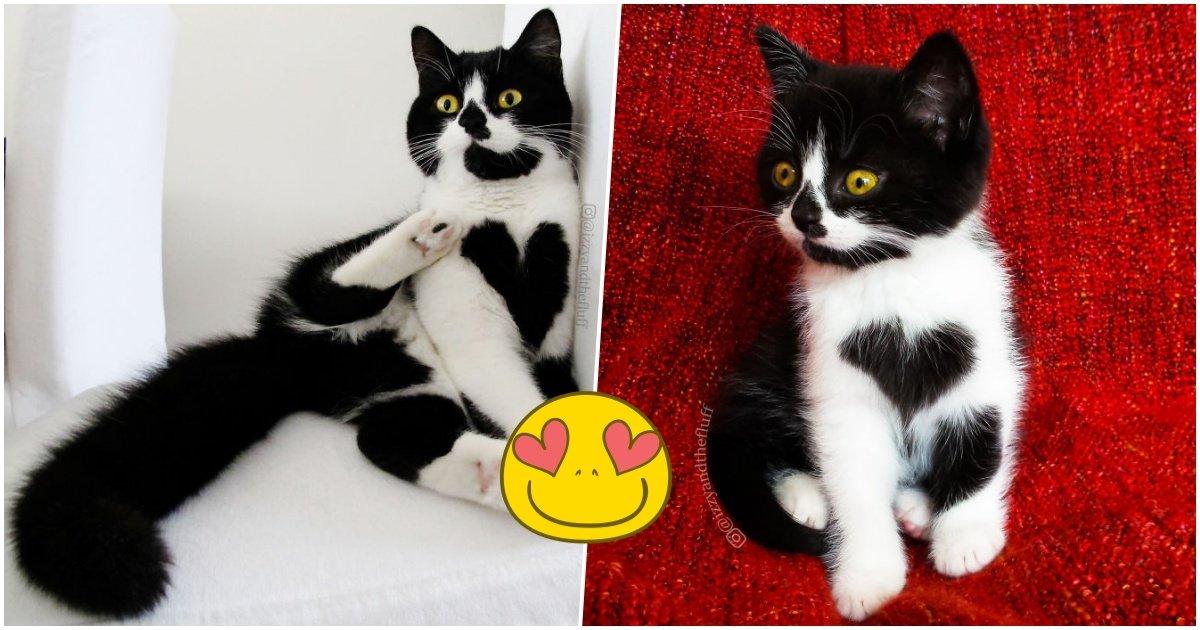 zoefacebook.jpg?resize=1200,630 - Découvrez les photos de Zoë, le chat qui affiche fièrement son coeur