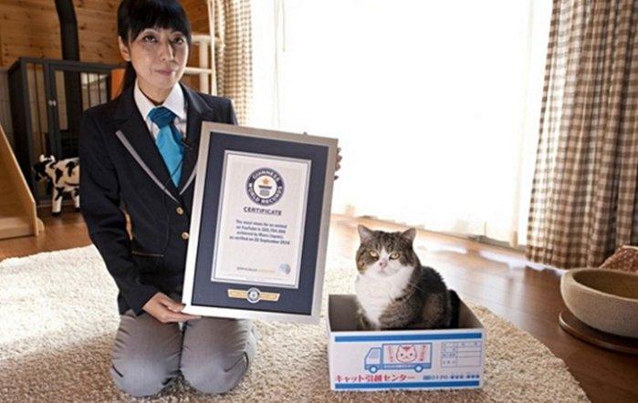 1 6 - ギネスに載ったYouTubeのスター猫「まる」の過去9年間(動画あり)