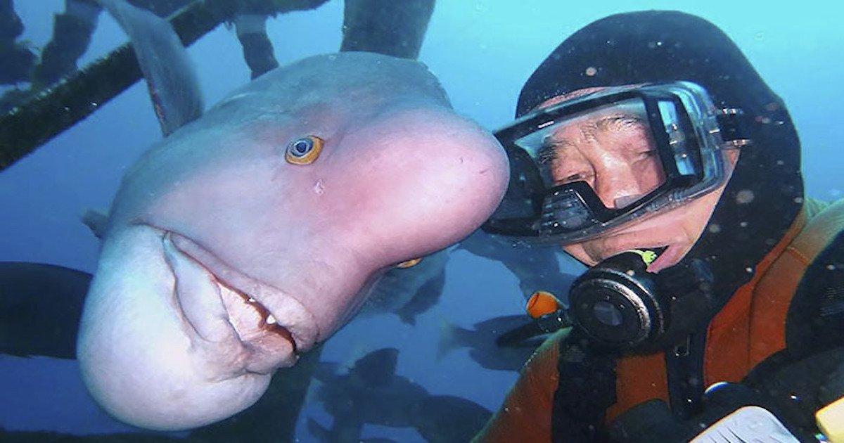 3 20.jpg?resize=1200,630 - 27년 우정, 물고기 친구 만나러 매일 바닷속 찾아가는 할아버지