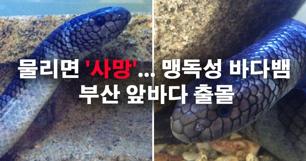 0 24 - 물리면 '사망'... 맹독성 바다뱀 부산 앞바다 출몰
