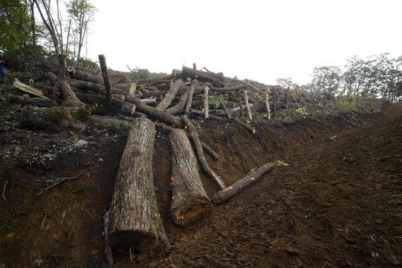 가리왕산 벌목현장