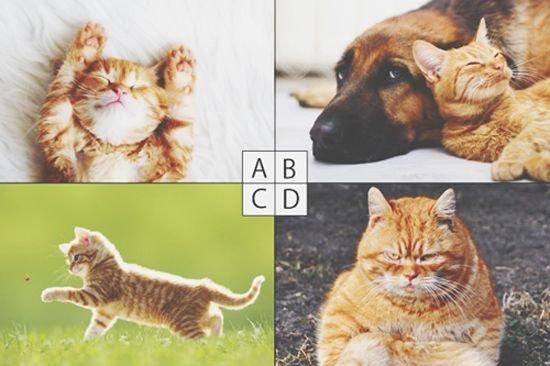 20150901005817 neko all.jpg?resize=1200,630 - 彼氏作り‼猫心理テストで見る異性から見たあなたの魅力