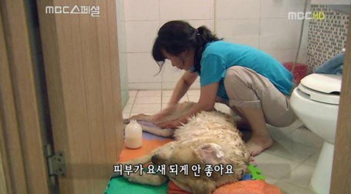 MBC '스페셜'