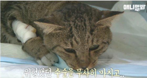 YouTube 'SBS TV동물농장x애니멀봐'