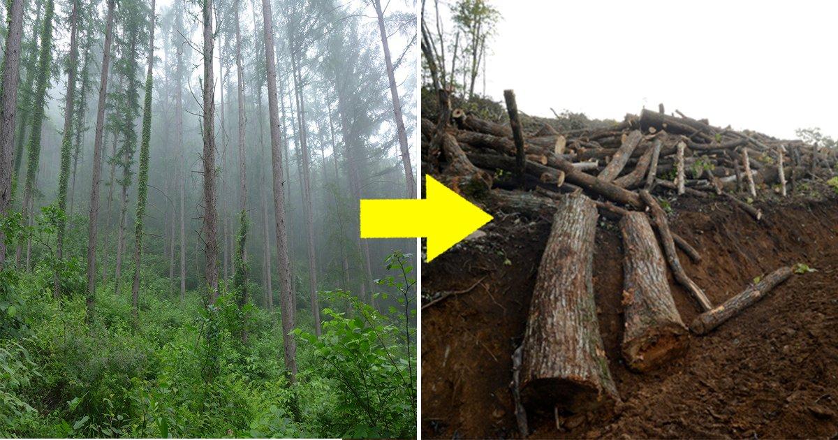 article thumbnail 13.jpg?resize=412,232 - 강원도 정선에서 '나무 5만 그루'가 사라진 이유는 황당하다