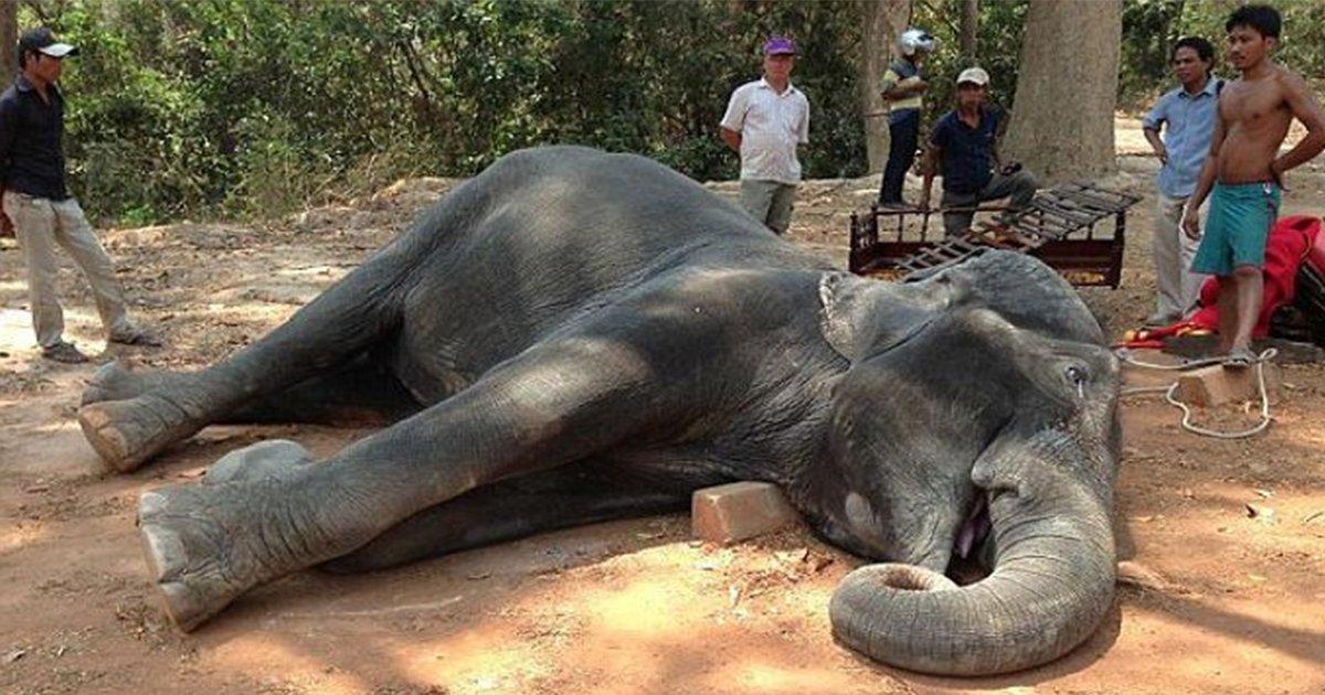 article thumbnail.jpg?resize=1200,630 - 15년 넘게 관광객 태우다 '심장마비'로 죽은 '노예' 코끼리