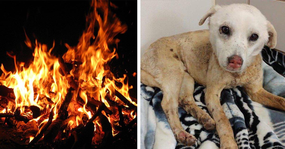 "article thumbnail2 2.jpg?resize=412,232 - ""갑자기 우리 댕댕이가 온몸에 '화상'을 입은채 돌아왔어요"" '불구덩이'로 잔인하게 던져진 강아지"