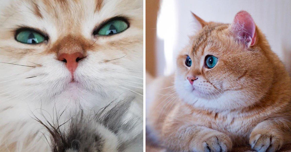 cat thumbnail.jpg?resize=1200,630 - 나보다 인기많은 고양이 인스타그램 계정 리스트