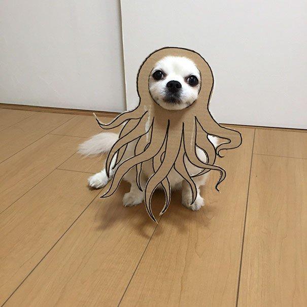 dog costume cardboard cutouts myouonnin 21 580f541648112  605.jpg?resize=412,232 - 自分のチワワのペットと素晴らしいコスプレーをする女性