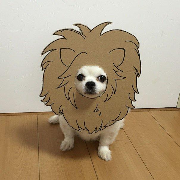 dog-costume-cardboard-cutouts-myouonnin-45-580f544d443f9__605