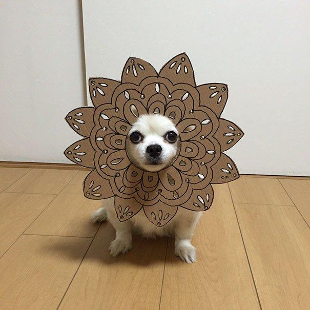 dog-costume-cardboard-cutouts-myouonnin-47-580f54514c2e9__605