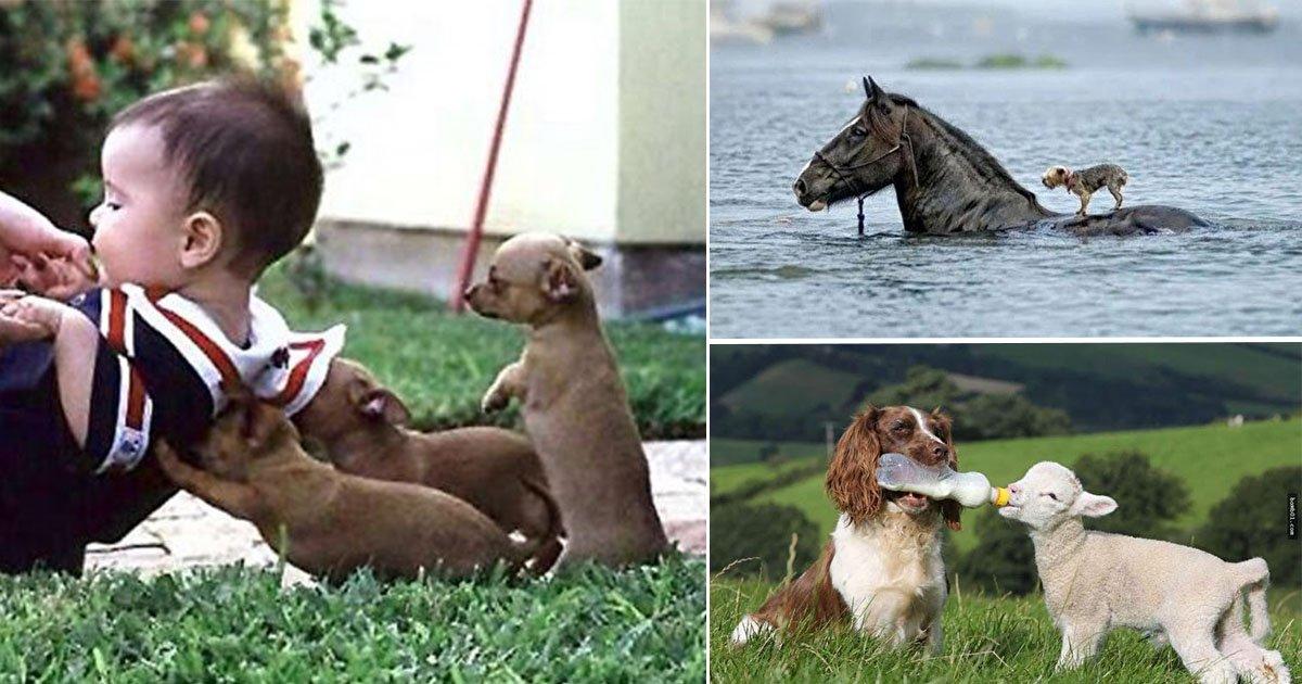 eca09cebaaa9 ec9786ec9d8c 1 16.jpg?resize=648,365 - 동물 친구들의 '착함'이 뿜뿜하는 순간들