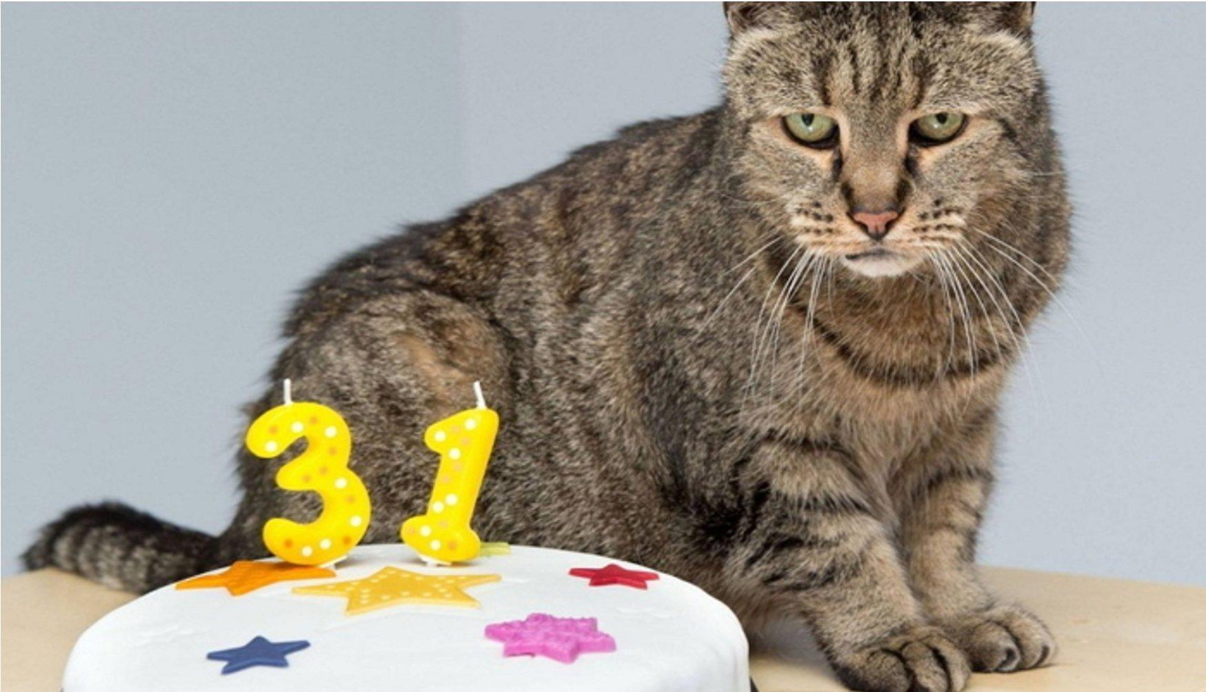 mirror - 생일 맞은 31살 고양이... '못마땅한 표정'을 짓는 이유는?