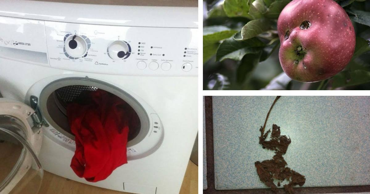 misleadingthings.jpg?resize=412,232 - 16 Ordinary Photos That Can Trick Your Brain