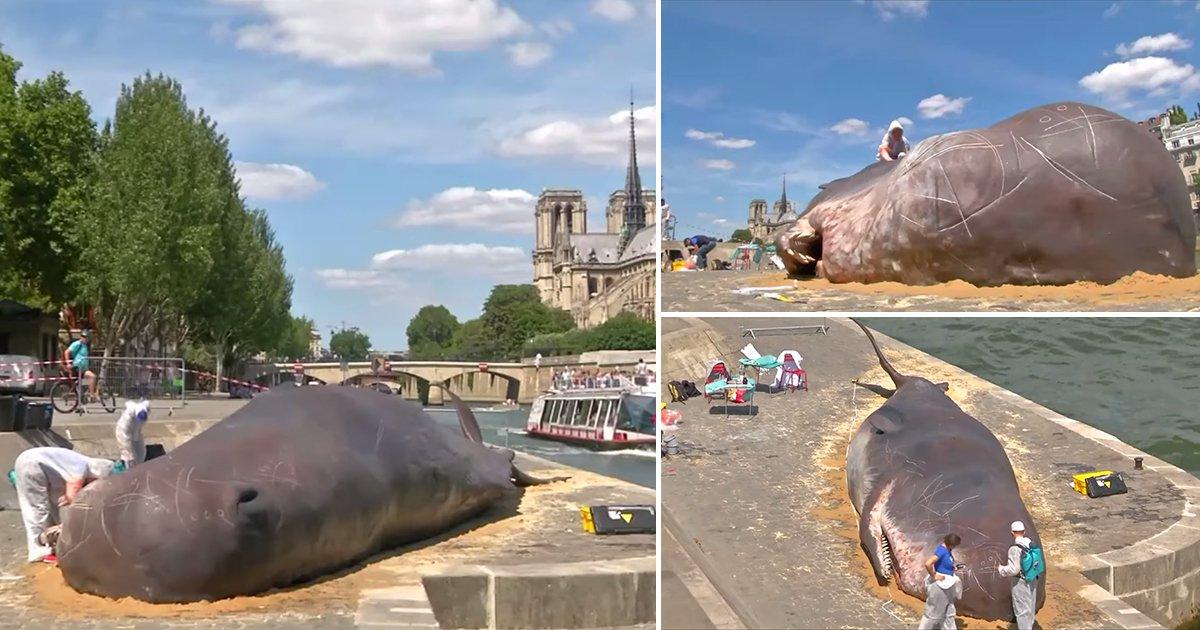 thumbnail 26.jpg?resize=1200,630 - 파리 센 강에 출몰한 17m 대형 고래의 정체!