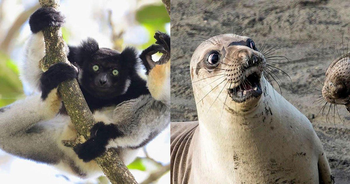 thumbnail 6.jpg?resize=412,232 - '2017 가장 웃긴 야생동물 사진 대회' 우승 후보작 선공개! (사진)