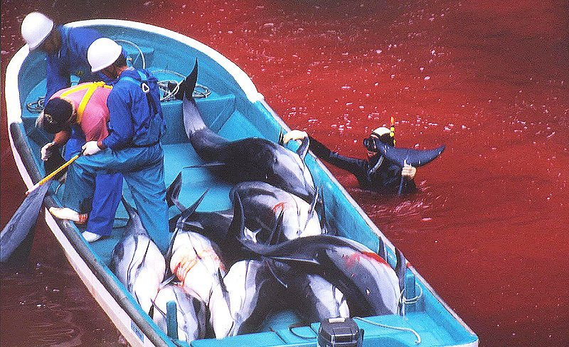 다큐멘터리 '더 코브: 슬픈 돌고래의 진실'