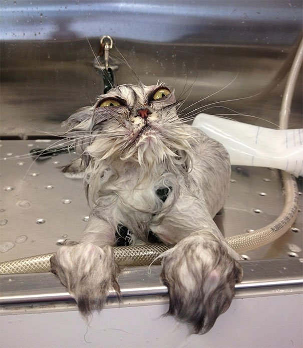 10 5 - 15+ Dramatic Cats Who Seriously Deserve An Oscar