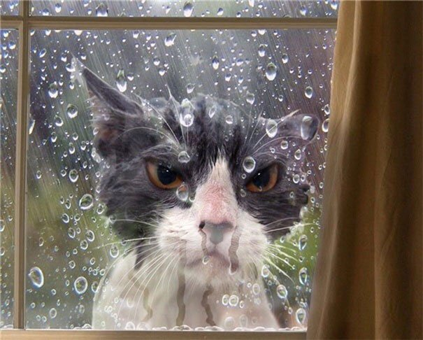 11 1 - 15+ Dramatic Cats Who Seriously Deserve An Oscar