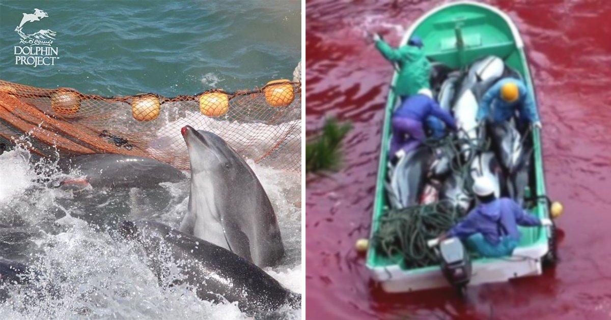 111 2.jpg?resize=1200,630 - 피바다 만드는 일본 '돌고래 사냥'… 9월부터 본격 시작