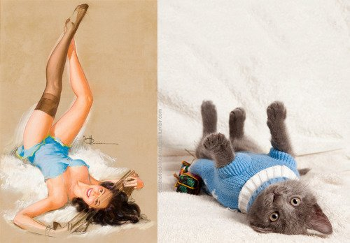 14 1 - 20+ Cats That Look Like Pinup Girls