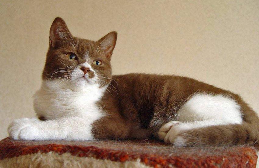1708160100pictures of cats - 동네 할머니의 '낯설지 않은 털 코트'... 코트 재료가 잃어버린 우리집 고양이?!