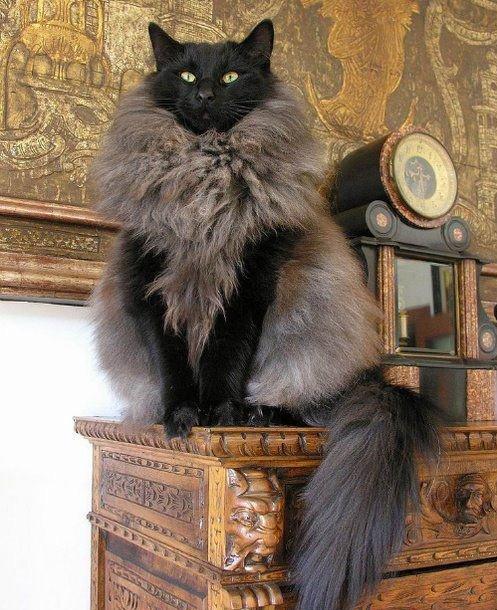 1708160100pinterest2 - 동네 할머니의 '낯설지 않은 털 코트'... 코트 재료가 잃어버린 우리집 고양이?!