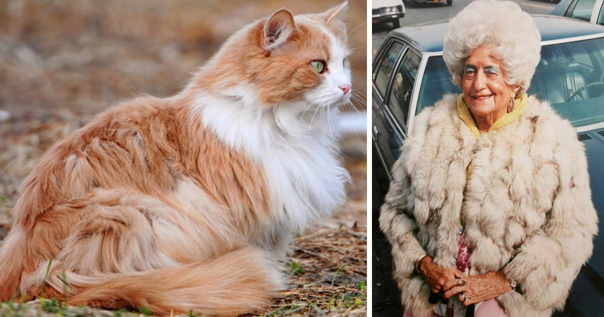 1708160100th.jpg?resize=1200,630 - 동네 할머니의 '낯설지 않은 털 코트'... 코트 재료가 잃어버린 우리집 고양이?!