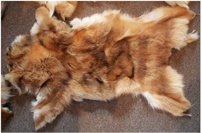 1708160100tradingbasis2 - 동네 할머니의 '낯설지 않은 털 코트'... 코트 재료가 잃어버린 우리집 고양이?!
