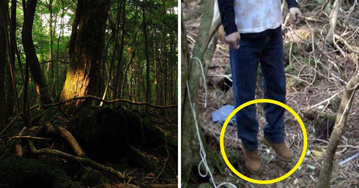 1708260700th.jpg?resize=412,232 - 한 번 들어가면 나올 수 없는 죽음의 숲 '주카이'... 일본의 '자살명소'