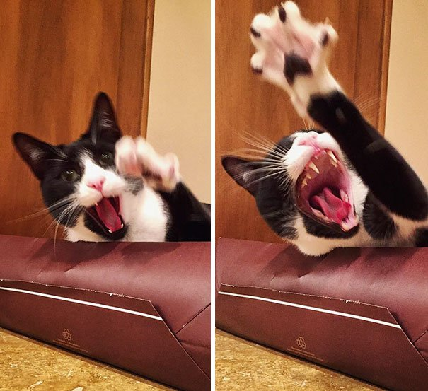 19 2 - 15+ Dramatic Cats Who Seriously Deserve An Oscar