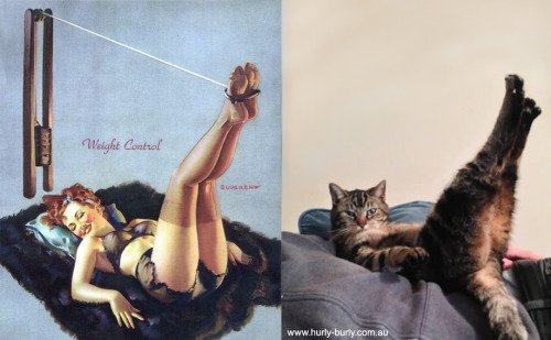 22 1 - 20+ Cats That Look Like Pinup Girls