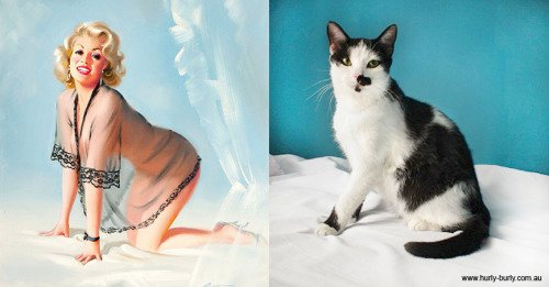 25 1 - 20+ Cats That Look Like Pinup Girls
