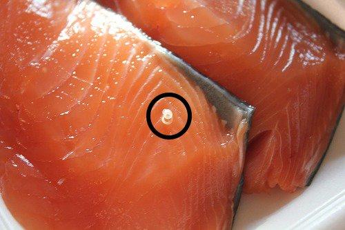 2b241d289f02e2e4b88fa03cc8e5a00f - 魚屋の刺身からアニサキスが出てきた?ーアニサキス症の症状と予防法は?