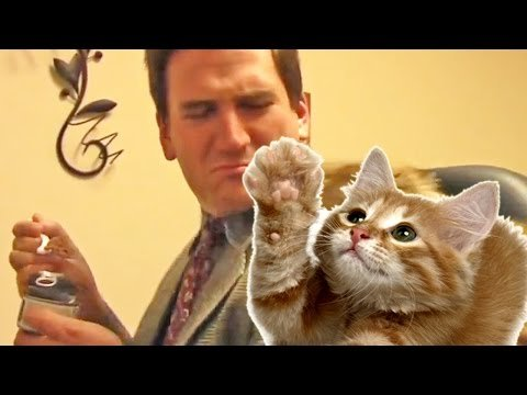 4 13 - They Tried To Sell Cats Like A Used Car, And The Internet Went Crazy For It! [Video]