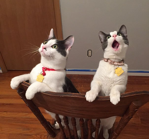 8 5 - 15+ Dramatic Cats Who Seriously Deserve An Oscar