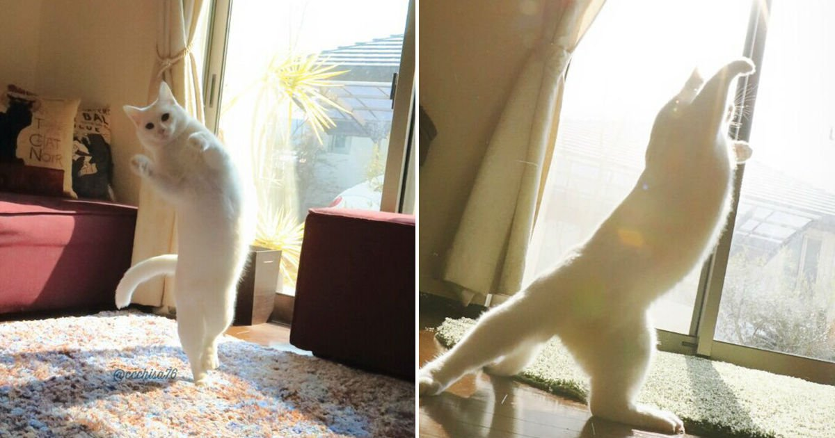 ballet cat.jpg?resize=412,232 - Cat Is Home Alone. Guess What? It's Dance Time!
