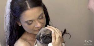 bride-pug-puppy-1500-1500x733